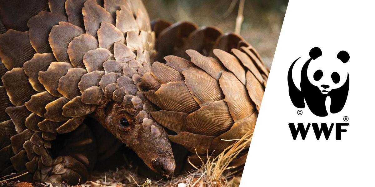 Em nova campanha, WWF quer que você ajude a combater o tráfico de pangolins