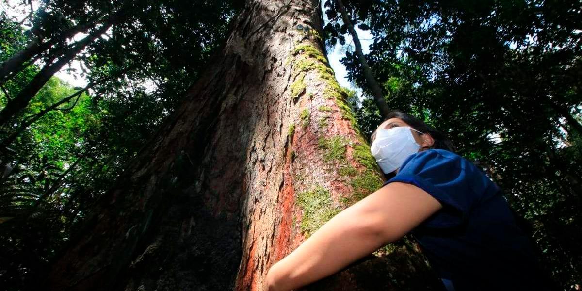 Museu da Amazônia lança campanha de adoção de árvores e doação de recursos para manter atividades e pesquisas