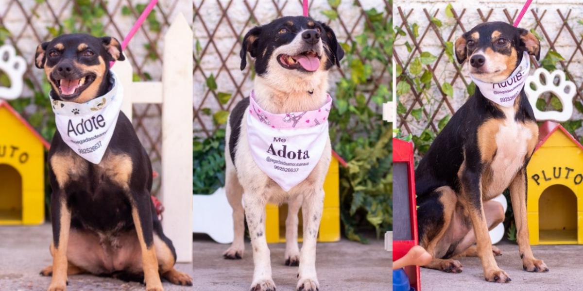 Shopping Ponta Negra promove evento para adoção de gatos e cachorros