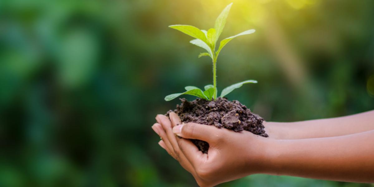 Resíduos sólidos e educação ambiental são temas de webinar nesta sexta-feira, 24