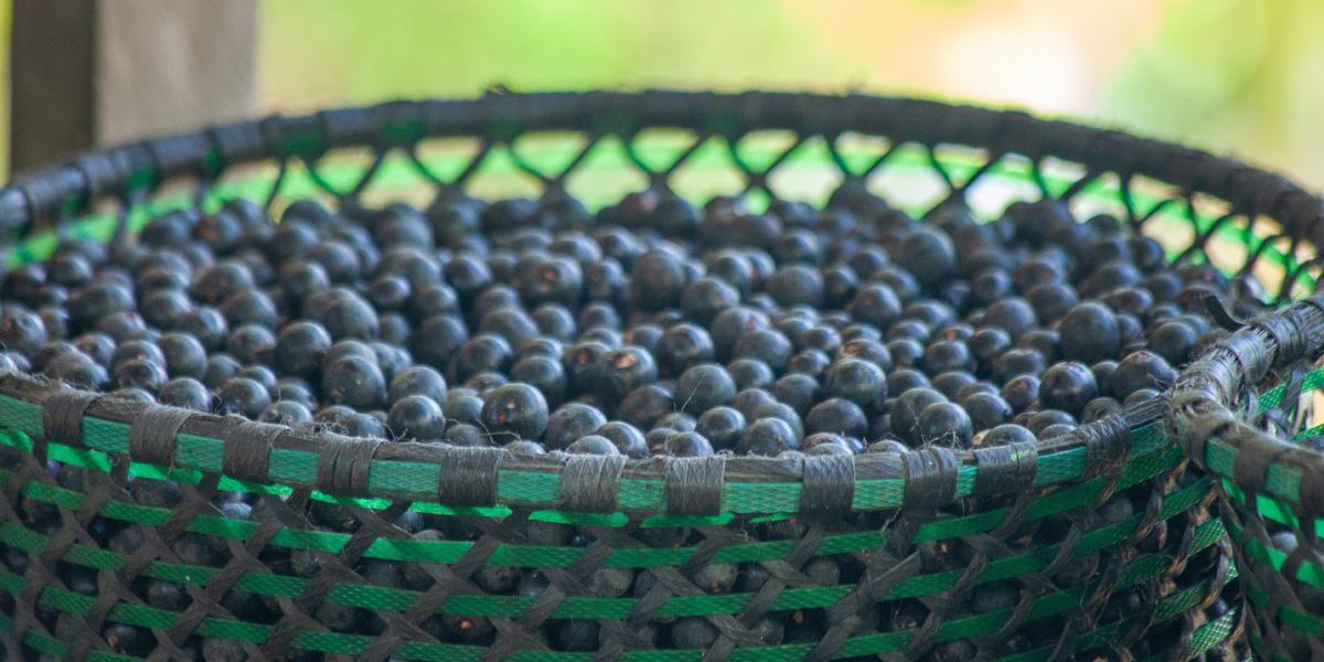 Às vésperas da COP 26, webinar discute oportunidades da bioeconomia